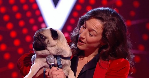 Un chien chante à The Voice et charme le jury